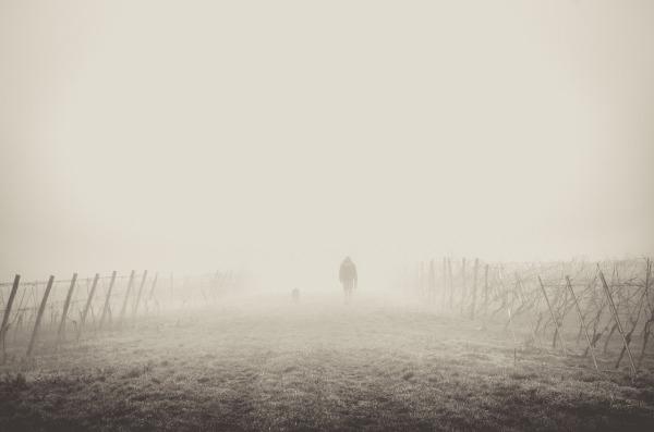 fog-1209205_1280.jpg