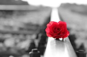 red-rose-on-rail-3695950_640